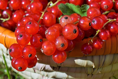 Image of Currants