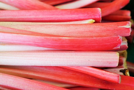 Image of Rhubarb