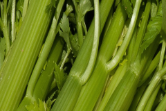 Image of Celery
